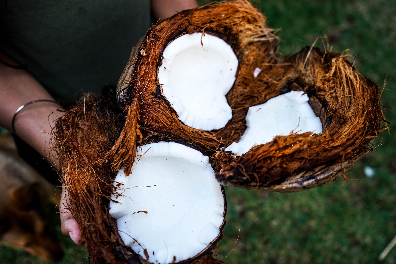 Kokosnøtten kan brukes til alt